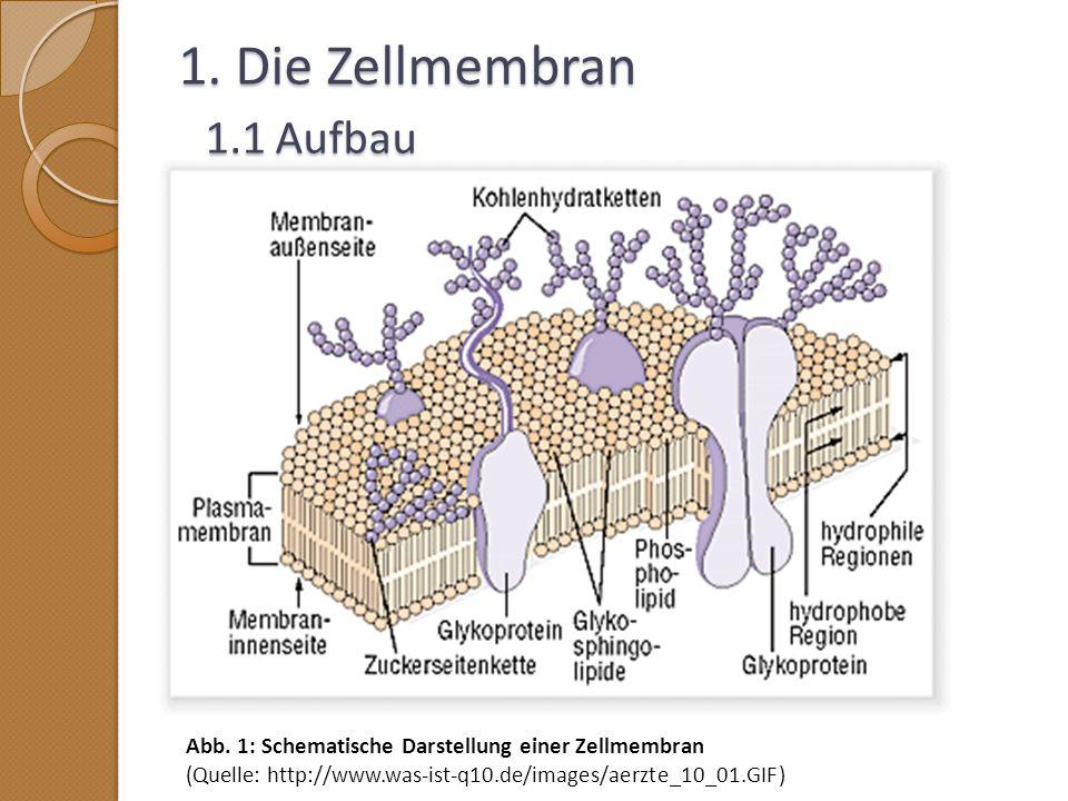 1. Die Zellmembran 1.1 Aufbau