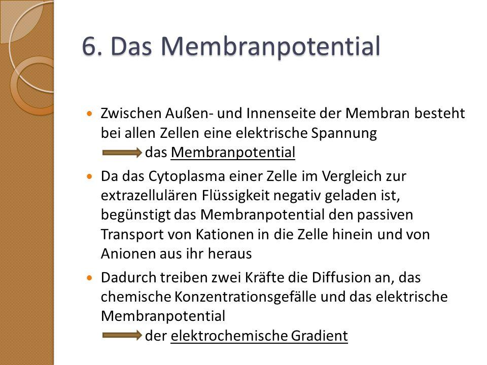 6. Das Membranpotential