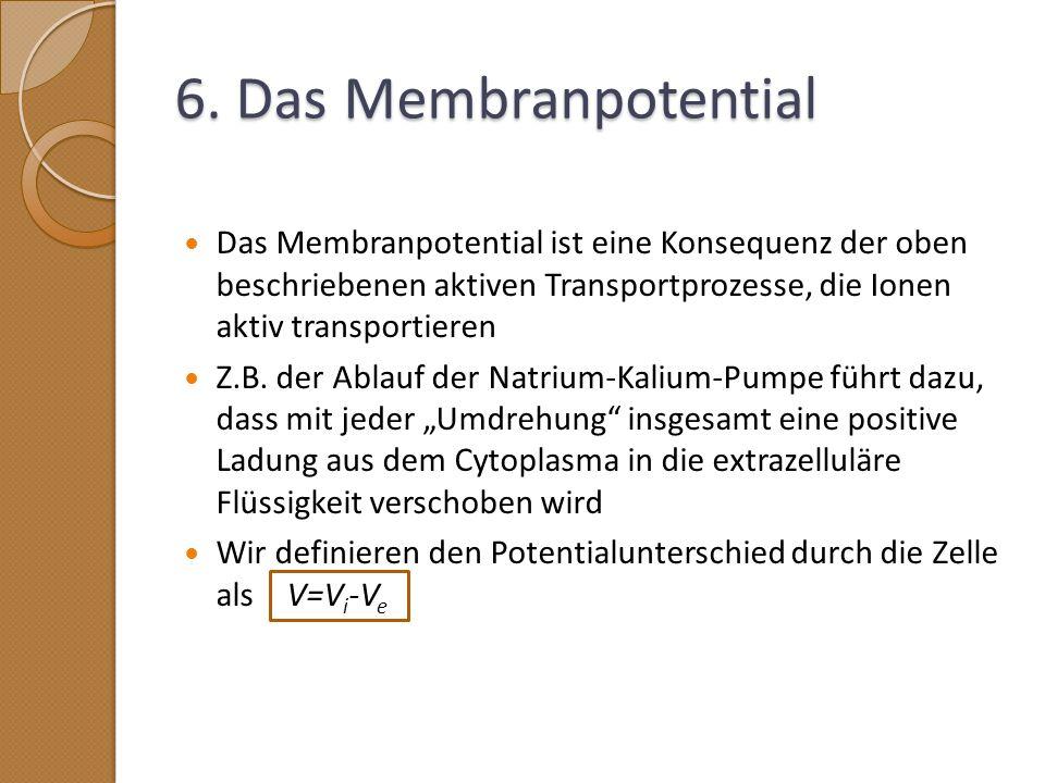 6. Das Membranpotential Das Membranpotential ist eine Konsequenz der oben beschriebenen aktiven Transportprozesse, die Ionen aktiv transportieren.
