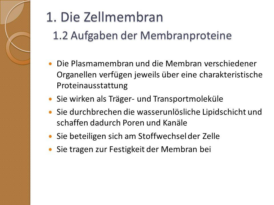 1. Die Zellmembran 1.2 Aufgaben der Membranproteine