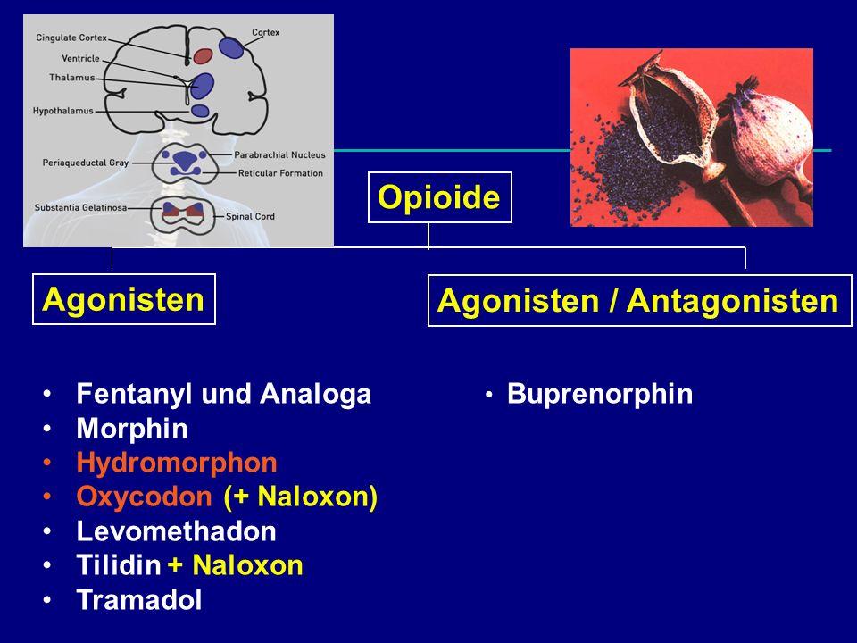 Agonisten / Antagonisten
