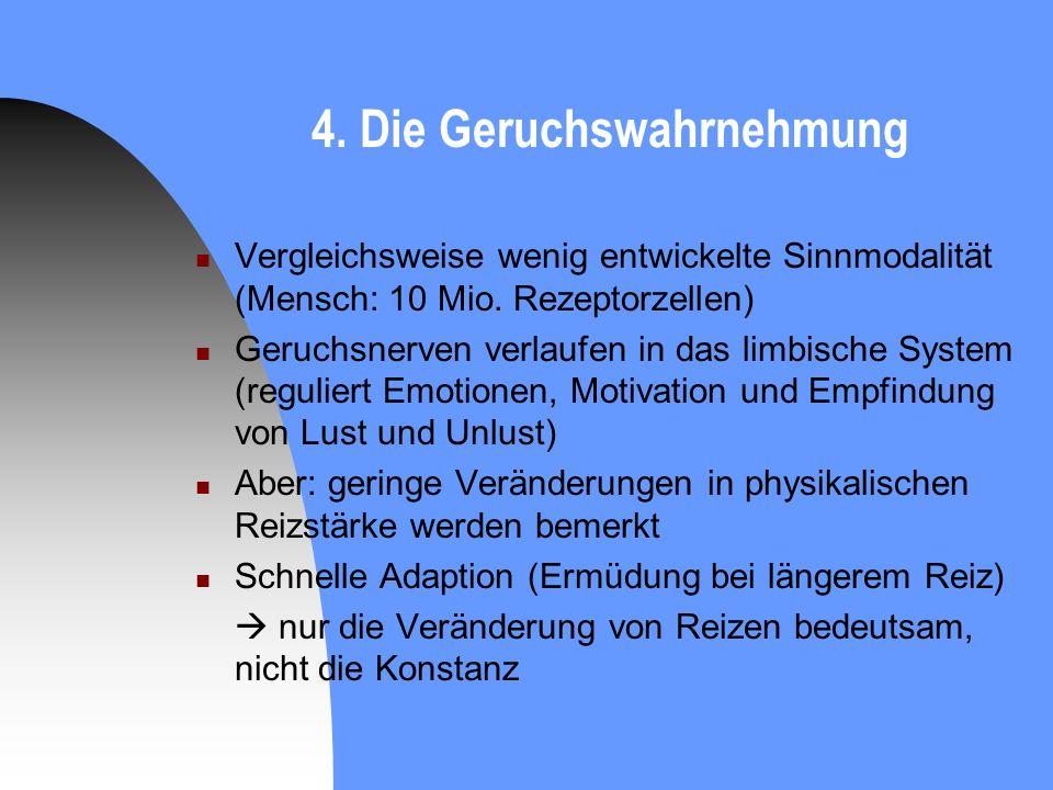 4. Die Geruchswahrnehmung