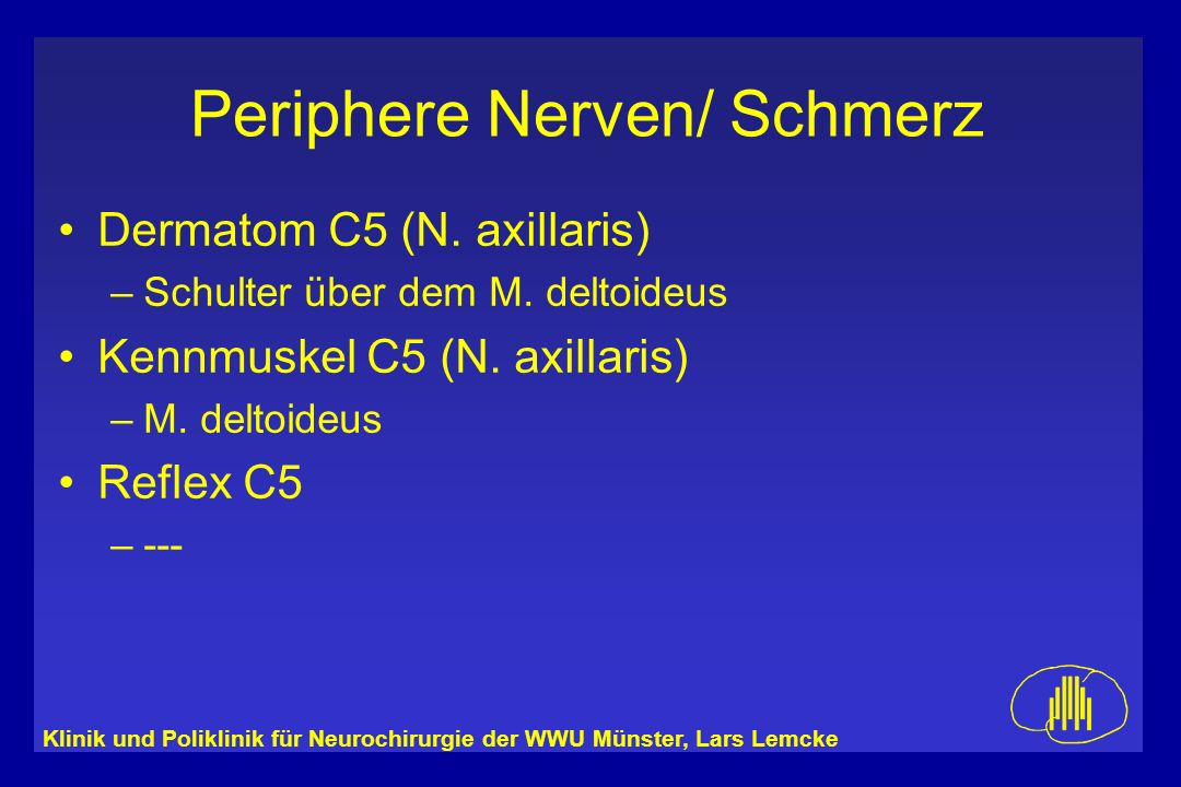 Dermatom C5 (N. axillaris) Kennmuskel C5 (N. axillaris) Reflex C5