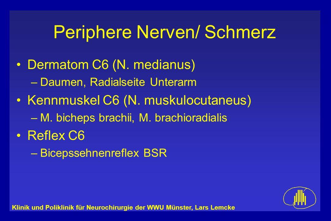 Dermatom C6 (N. medianus) Kennmuskel C6 (N. muskulocutaneus) Reflex C6