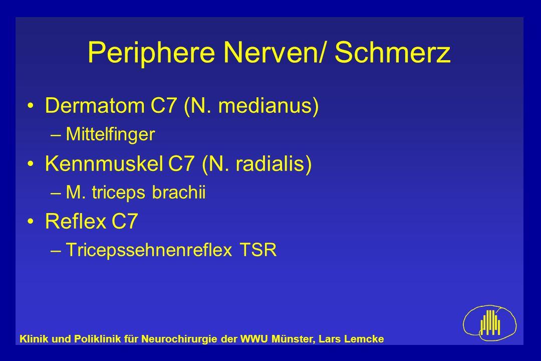 Dermatom C7 (N. medianus) Kennmuskel C7 (N. radialis) Reflex C7