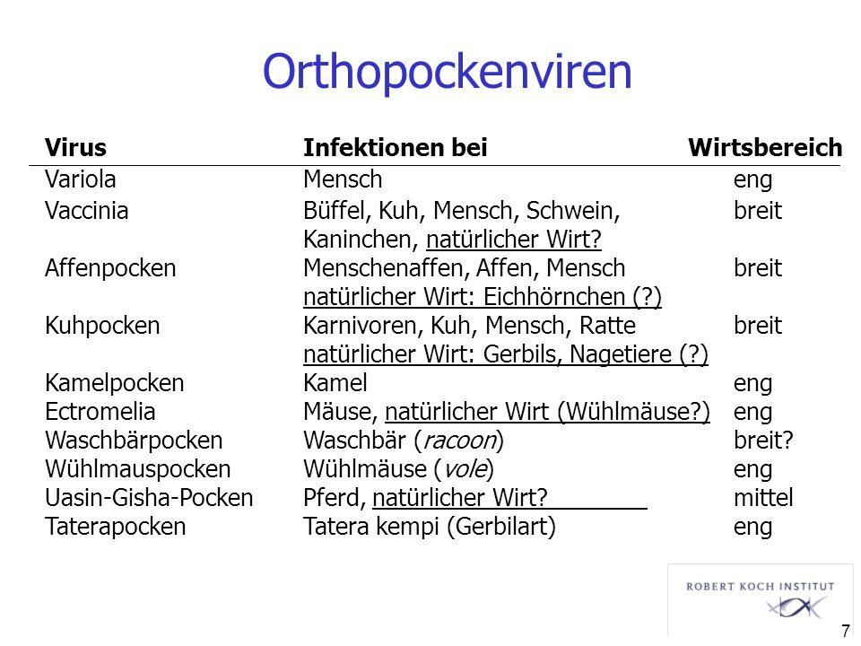 Orthopockenviren Virus Infektionen bei Wirtsbereich Variola Mensch eng