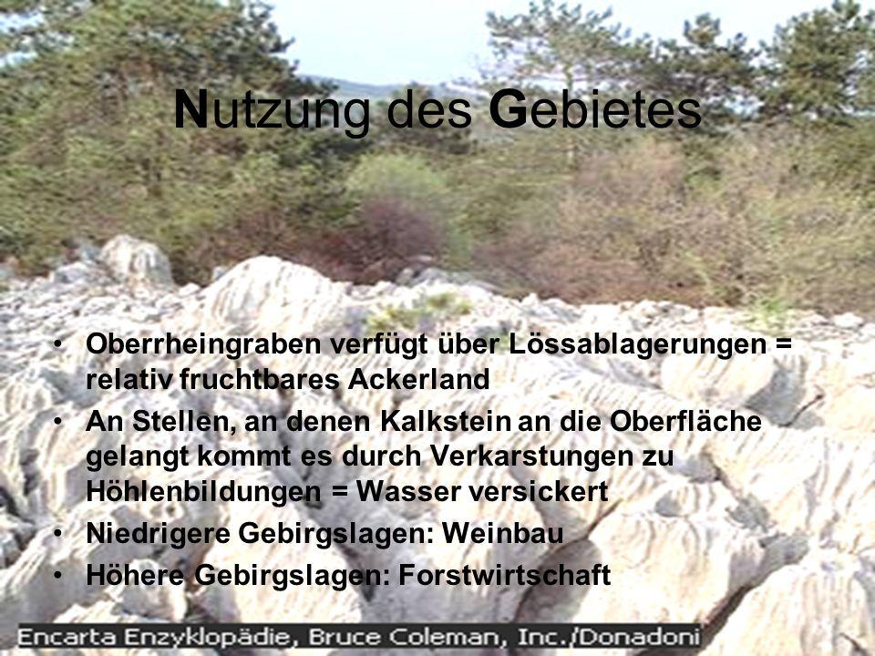 Nutzung des Gebietes Oberrheingraben verfügt über Lössablagerungen = relativ fruchtbares Ackerland.