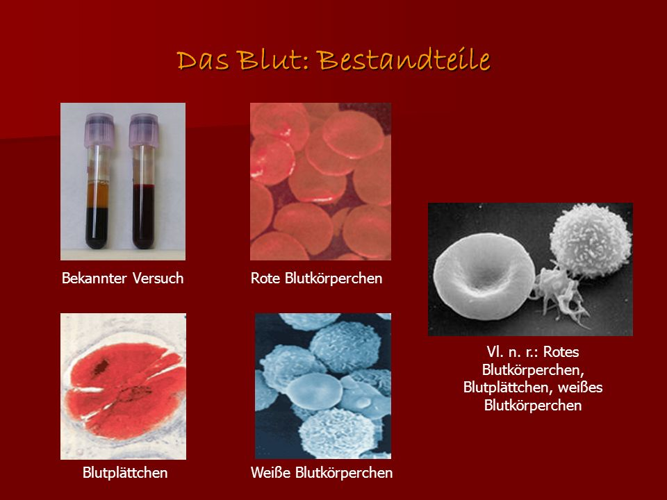 Das Blut: Bestandteile