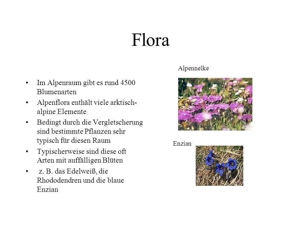 Flora Im Alpenraum gibt es rund 4500 Blumenarten