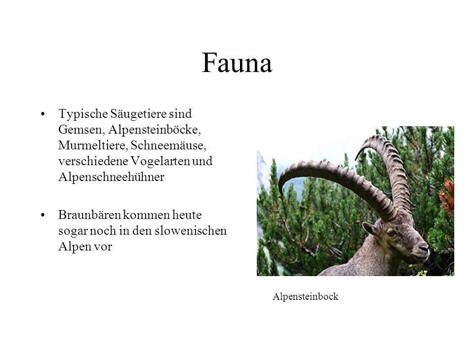 Fauna Typische Säugetiere sind Gemsen, Alpensteinböcke, Murmeltiere, Schneemäuse, verschiedene Vogelarten und Alpenschneehühner.