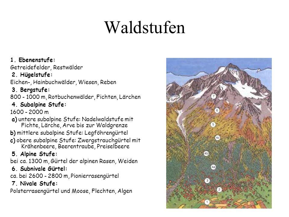 Waldstufen 1. Ebenenstufe: Getreidefelder, Restwälder 2. Hügelstufe:
