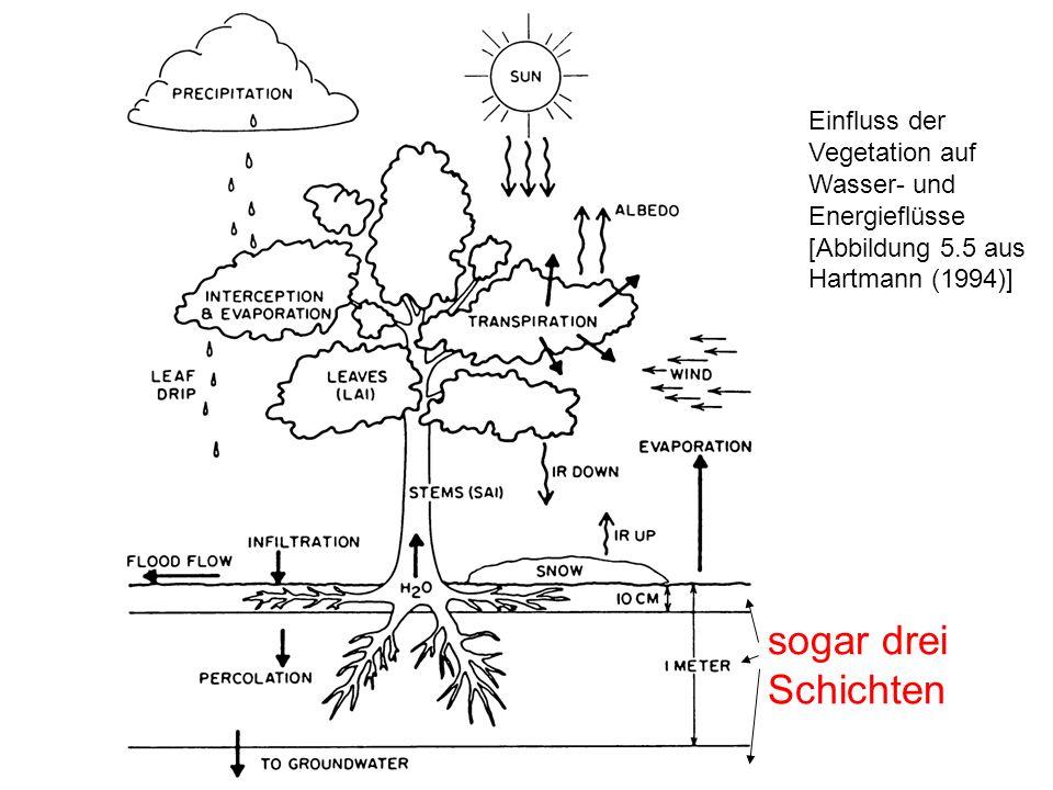 Einfluss der Vegetation auf Wasser- und Energieflüsse