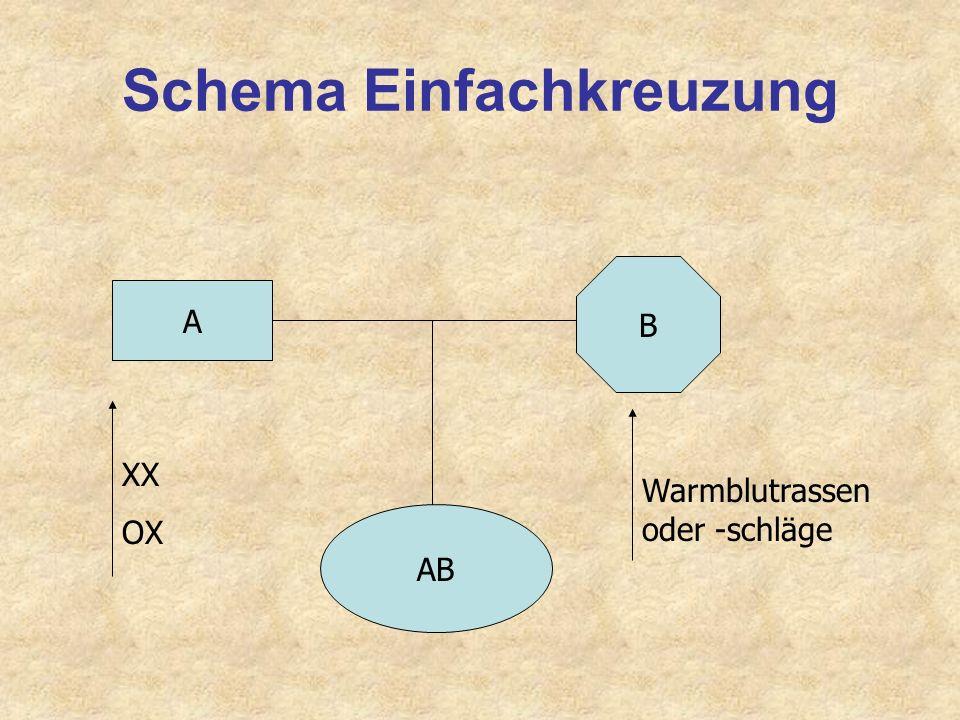 Schema Einfachkreuzung
