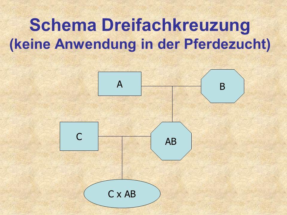 Schema Dreifachkreuzung (keine Anwendung in der Pferdezucht)