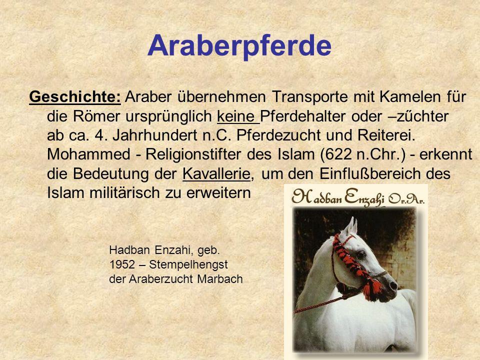 Araberpferde