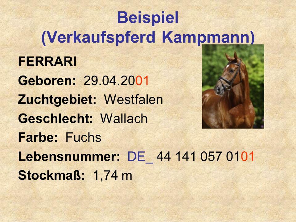 Beispiel (Verkaufspferd Kampmann)