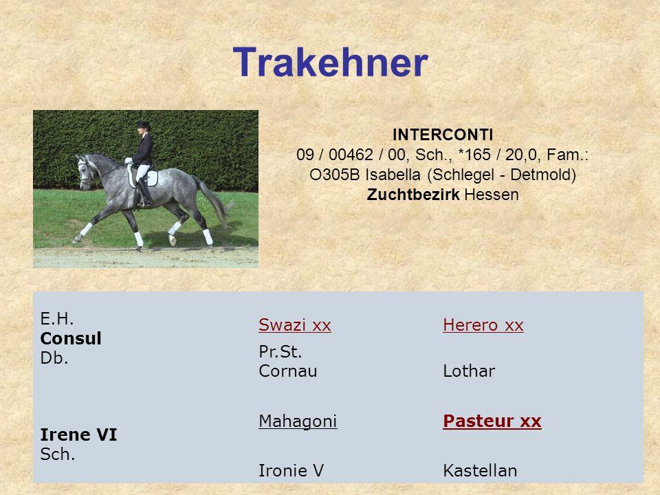 Trakehner INTERCONTI 09 / 00462 / 00, Sch., *165 / 20,0, Fam.: O305B Isabella (Schlegel - Detmold) Zuchtbezirk Hessen.
