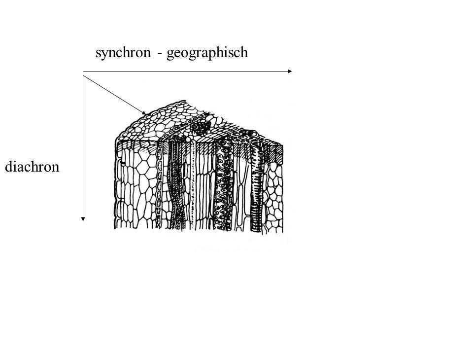 synchron - geographisch