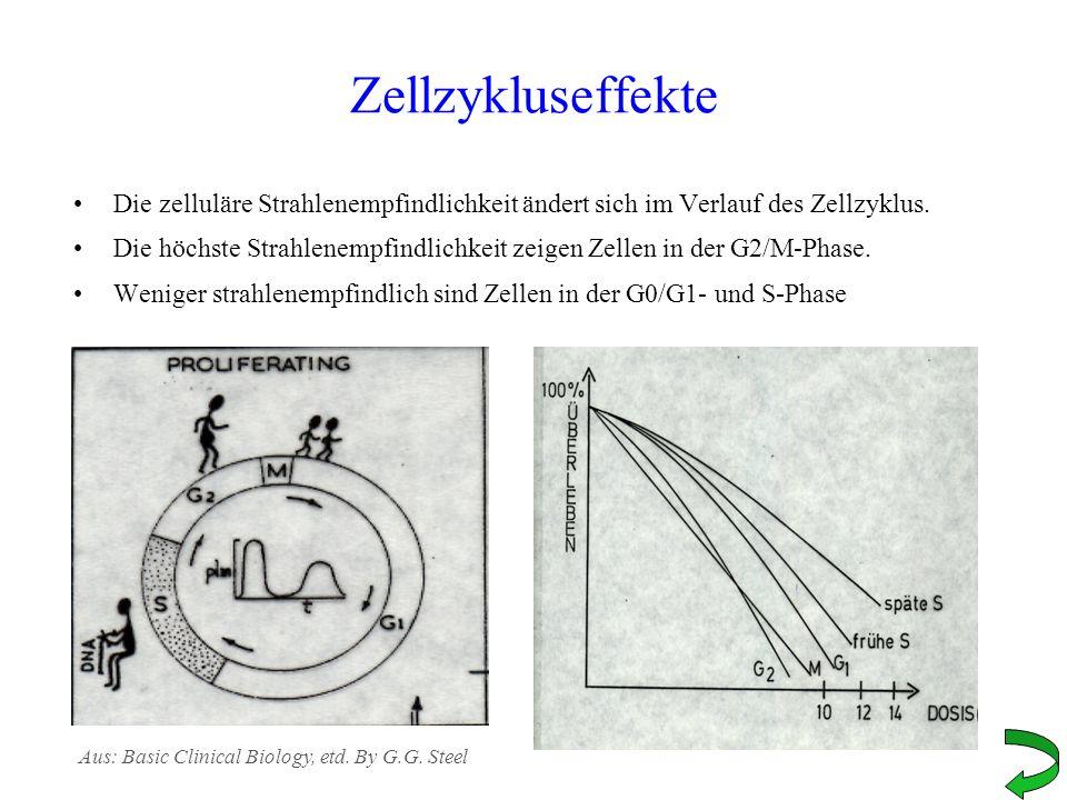 Zellzykluseffekte Die zelluläre Strahlenempfindlichkeit ändert sich im Verlauf des Zellzyklus.