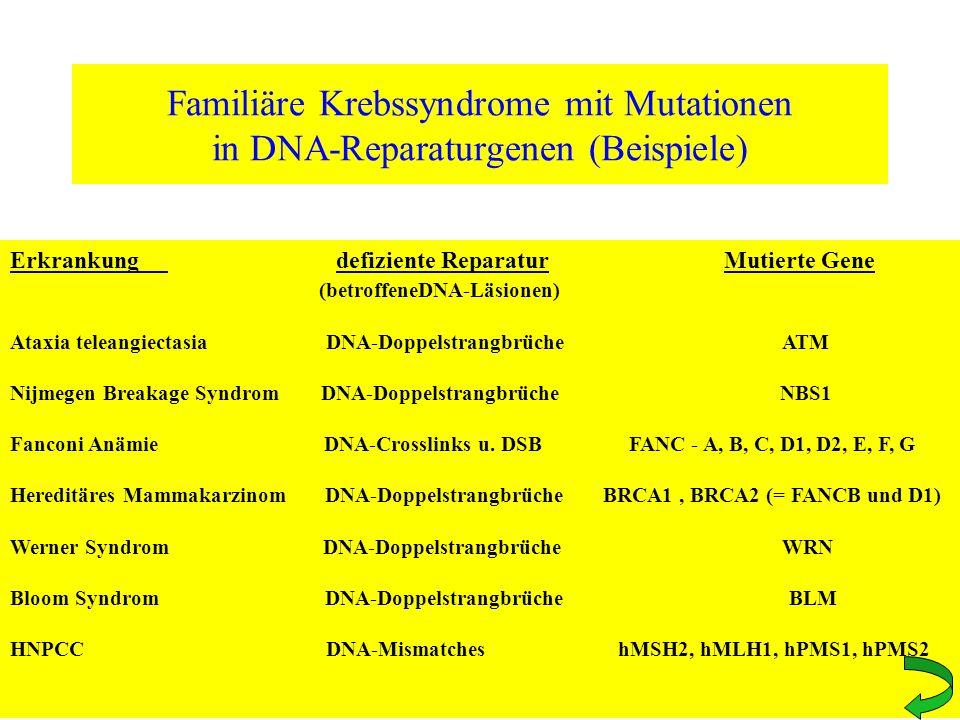 Familiäre Krebssyndrome mit Mutationen in DNA-Reparaturgenen (Beispiele)