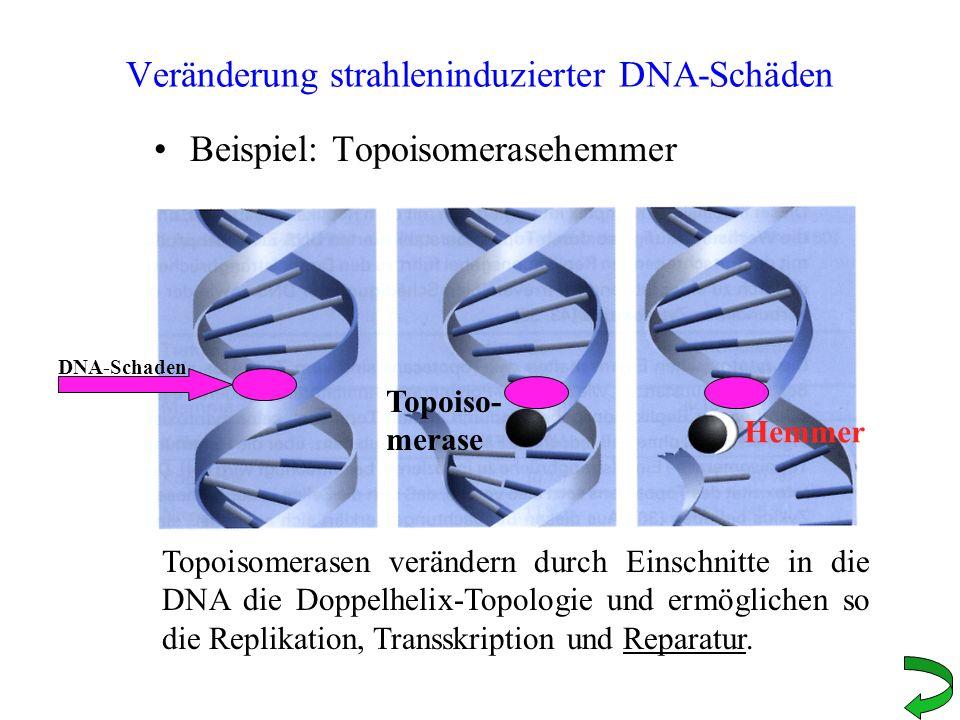 Veränderung strahleninduzierter DNA-Schäden