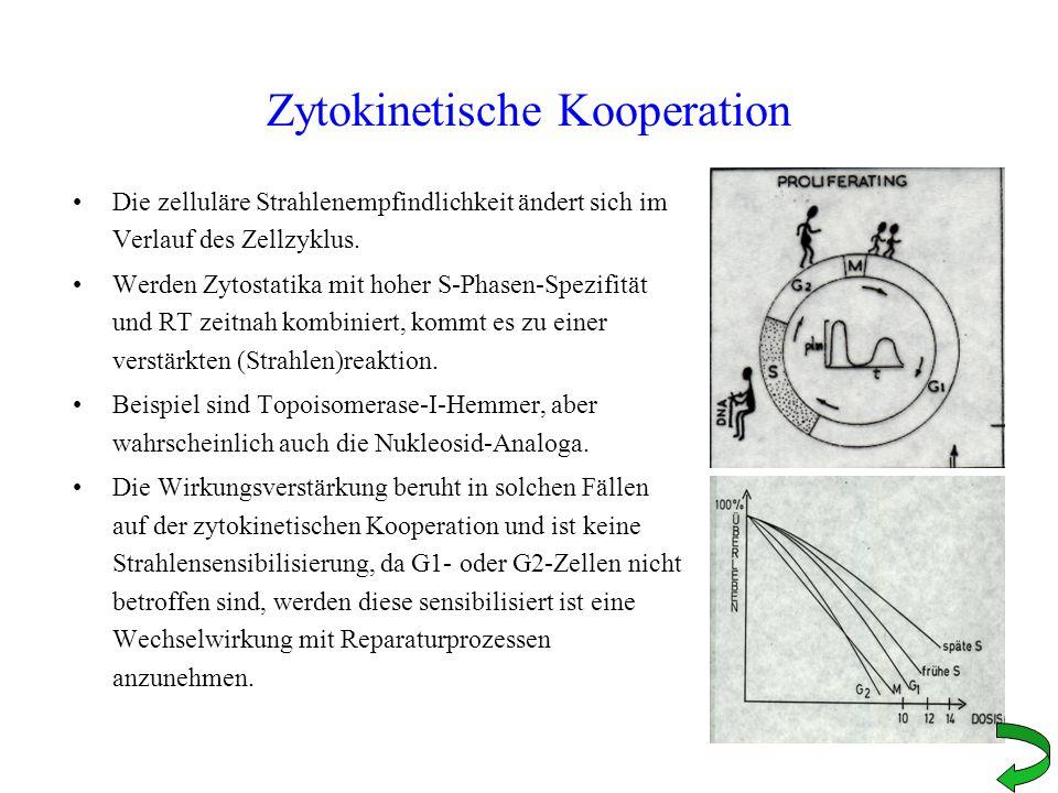 Zytokinetische Kooperation