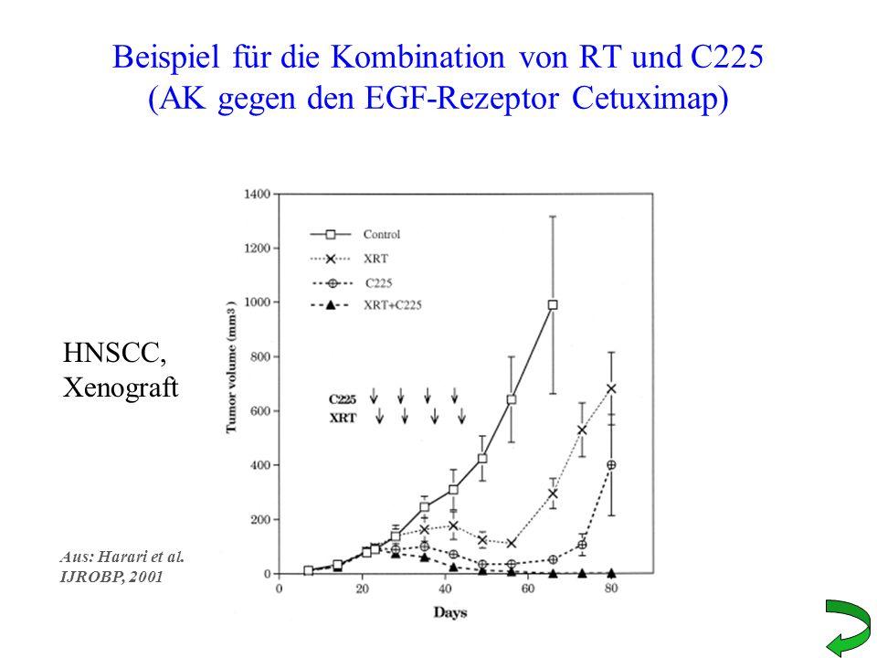 Beispiel für die Kombination von RT und C225 (AK gegen den EGF-Rezeptor Cetuximap)