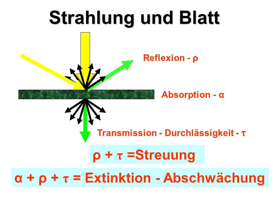 Strahlung und Blatt ρ + τ =Streuung