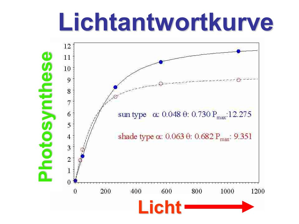Lichtantwortkurve Photosynthese Licht