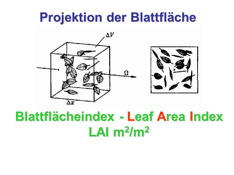 Blattflächeindex - Leaf Area Index LAI m2/m2
