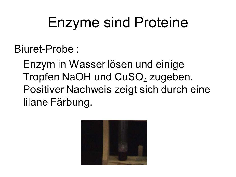 Enzyme sind Proteine Biuret-Probe :