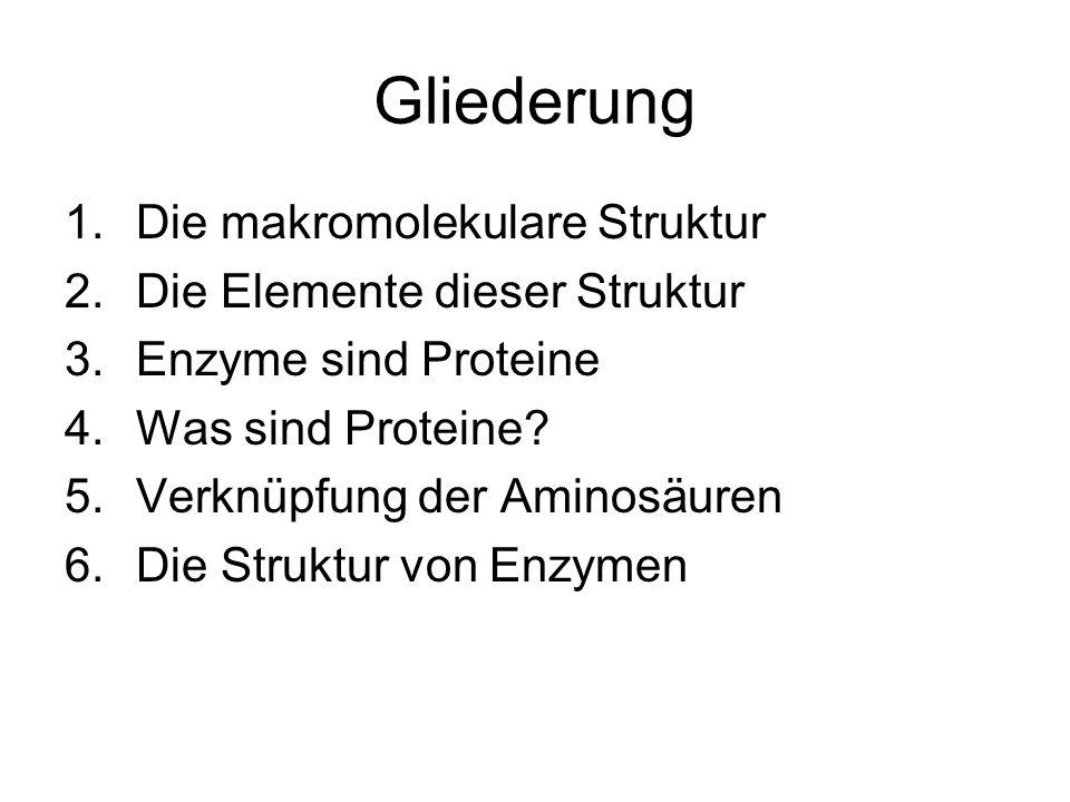 Gliederung Die makromolekulare Struktur Die Elemente dieser Struktur