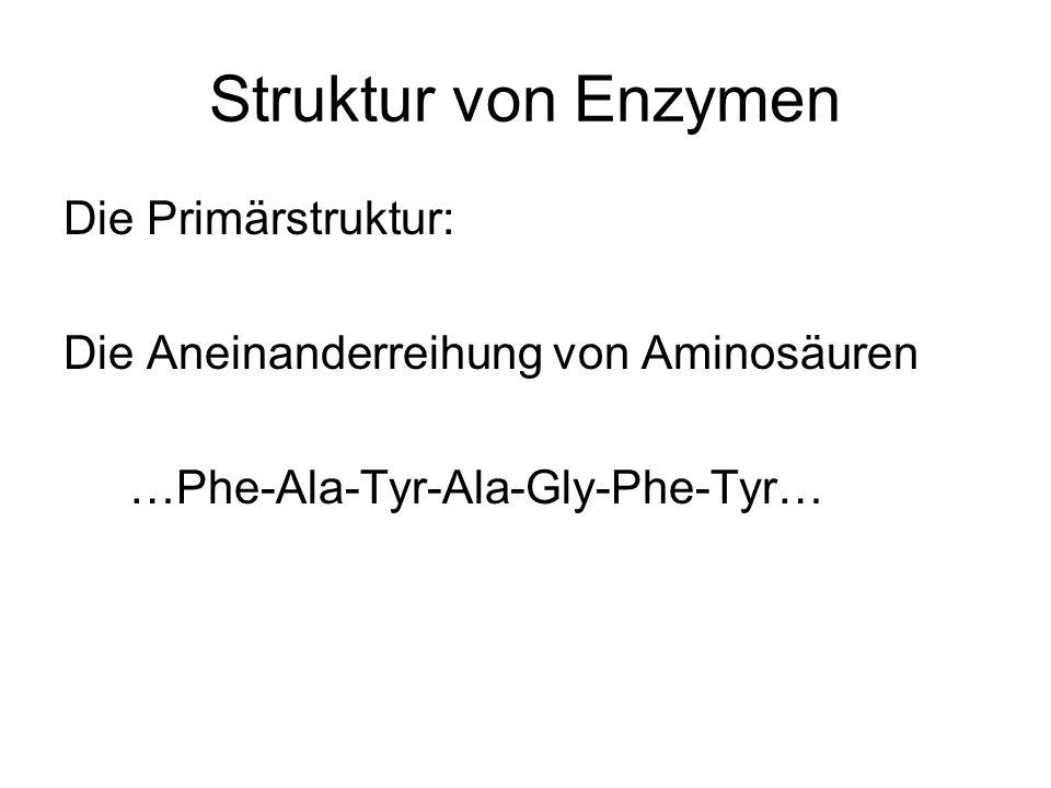 Struktur von Enzymen Die Primärstruktur: