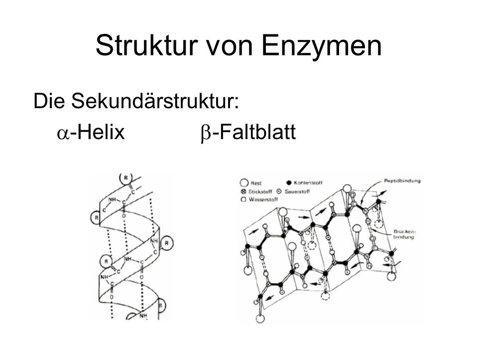Struktur von Enzymen Die Sekundärstruktur: a-Helix b-Faltblatt