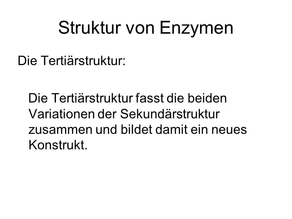 Struktur von Enzymen Die Tertiärstruktur:
