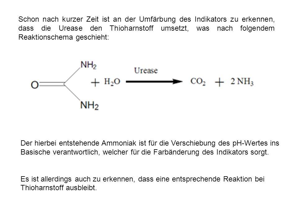 Schon nach kurzer Zeit ist an der Umfärbung des Indikators zu erkennen, dass die Urease den Thioharnstoff umsetzt, was nach folgendem Reaktionschema geschieht: