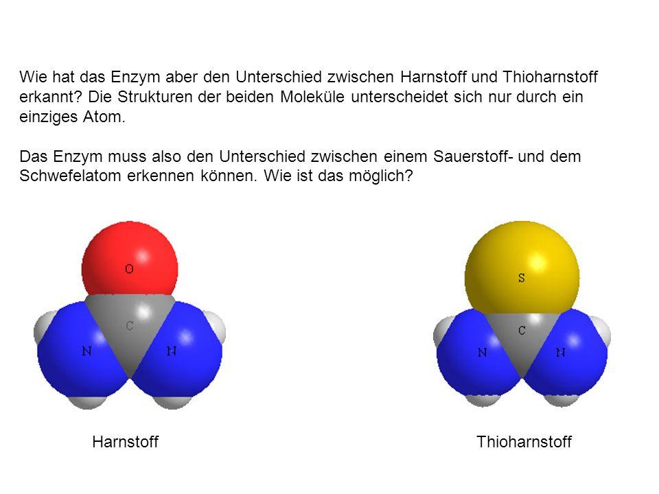Wie hat das Enzym aber den Unterschied zwischen Harnstoff und Thioharnstoff erkannt Die Strukturen der beiden Moleküle unterscheidet sich nur durch ein einziges Atom.
