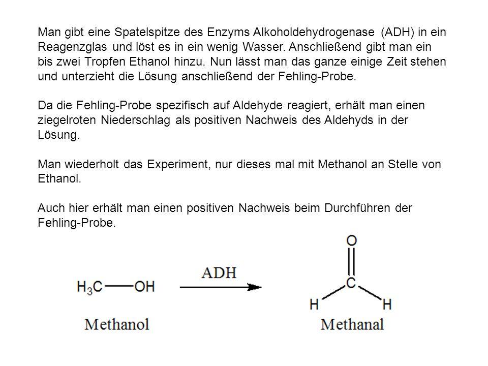 Man gibt eine Spatelspitze des Enzyms Alkoholdehydrogenase (ADH) in ein Reagenzglas und löst es in ein wenig Wasser. Anschließend gibt man ein bis zwei Tropfen Ethanol hinzu. Nun lässt man das ganze einige Zeit stehen und unterzieht die Lösung anschließend der Fehling-Probe.
