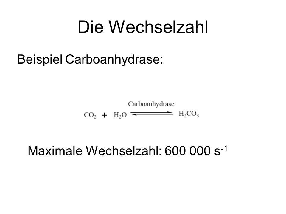 Die Wechselzahl Beispiel Carboanhydrase: