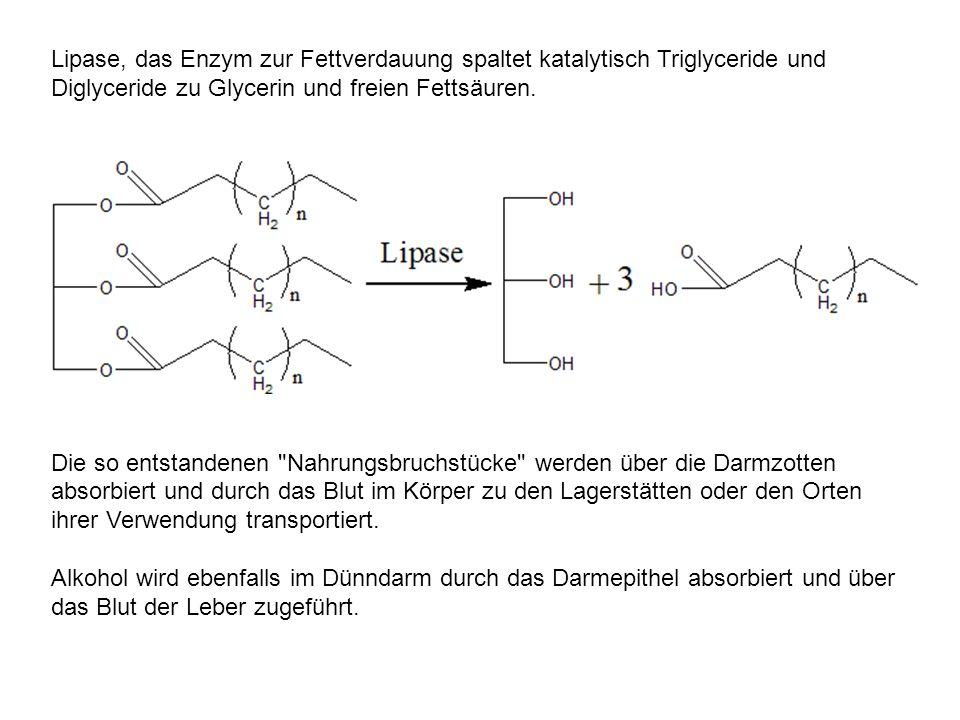 Lipase, das Enzym zur Fettverdauung spaltet katalytisch Triglyceride und Diglyceride zu Glycerin und freien Fettsäuren.