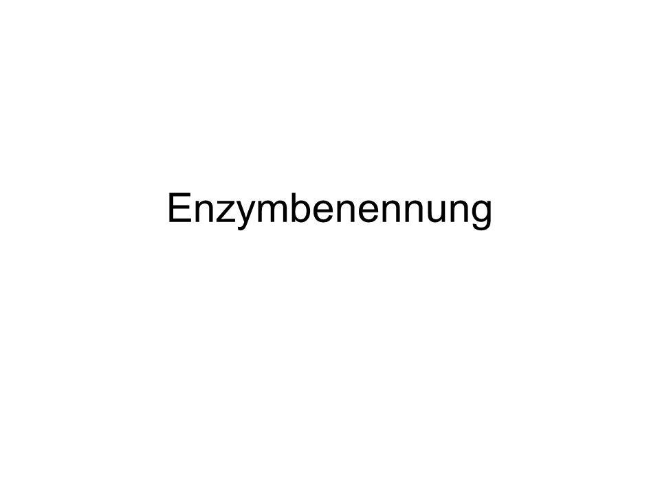 Enzymbenennung