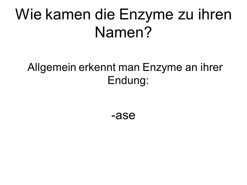 Wie kamen die Enzyme zu ihren Namen