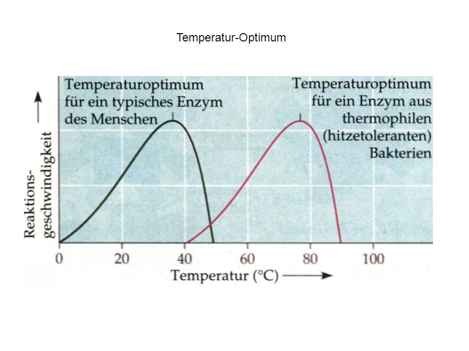 Temperatur-Optimum