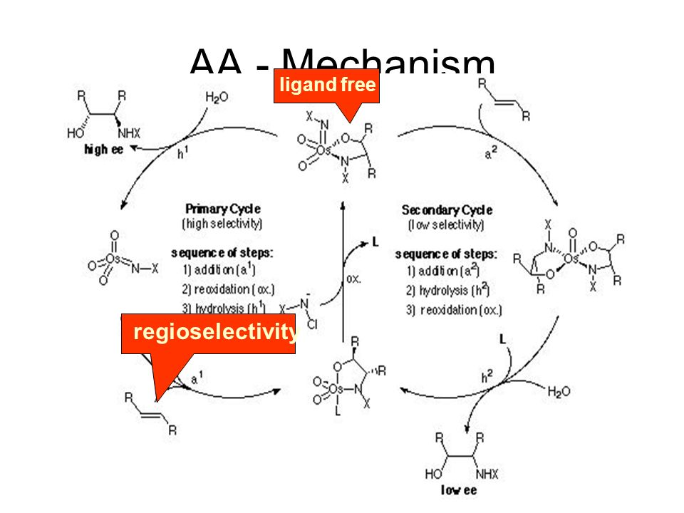 AA - Mechanism regioselectivity ligand free