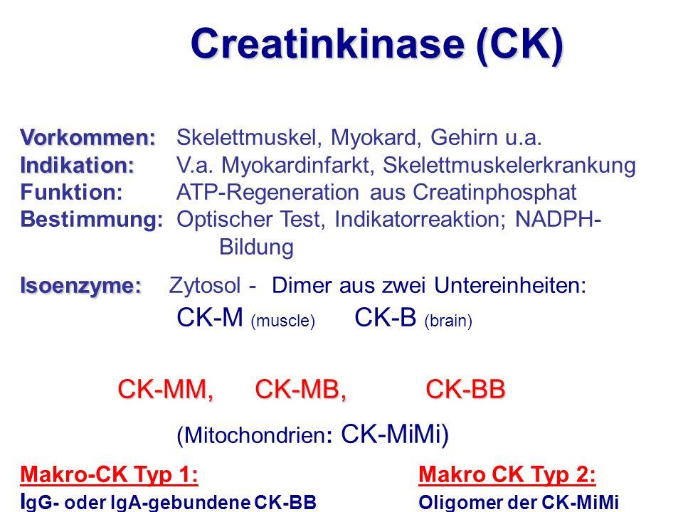 Creatinkinase (CK) Vorkommen: Skelettmuskel, Myokard, Gehirn u.a.