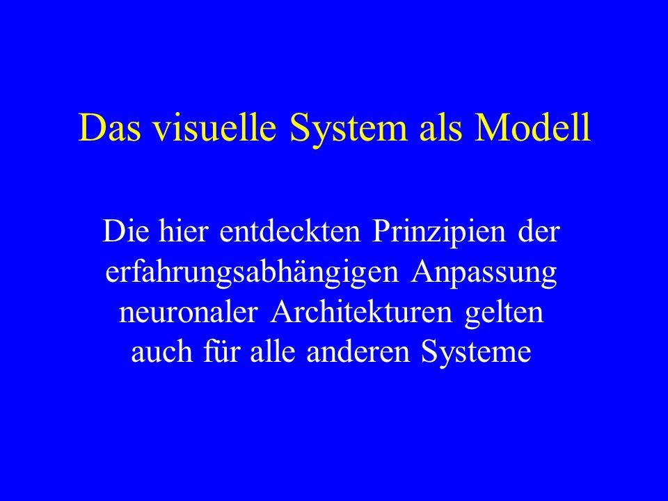 Das visuelle System als Modell