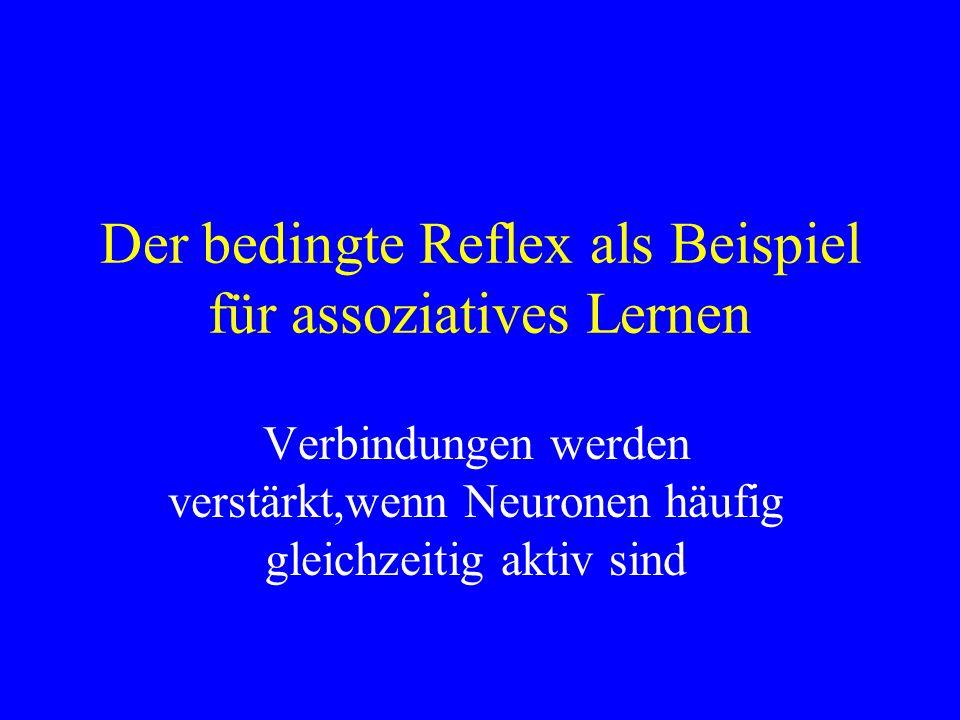 Der bedingte Reflex als Beispiel für assoziatives Lernen