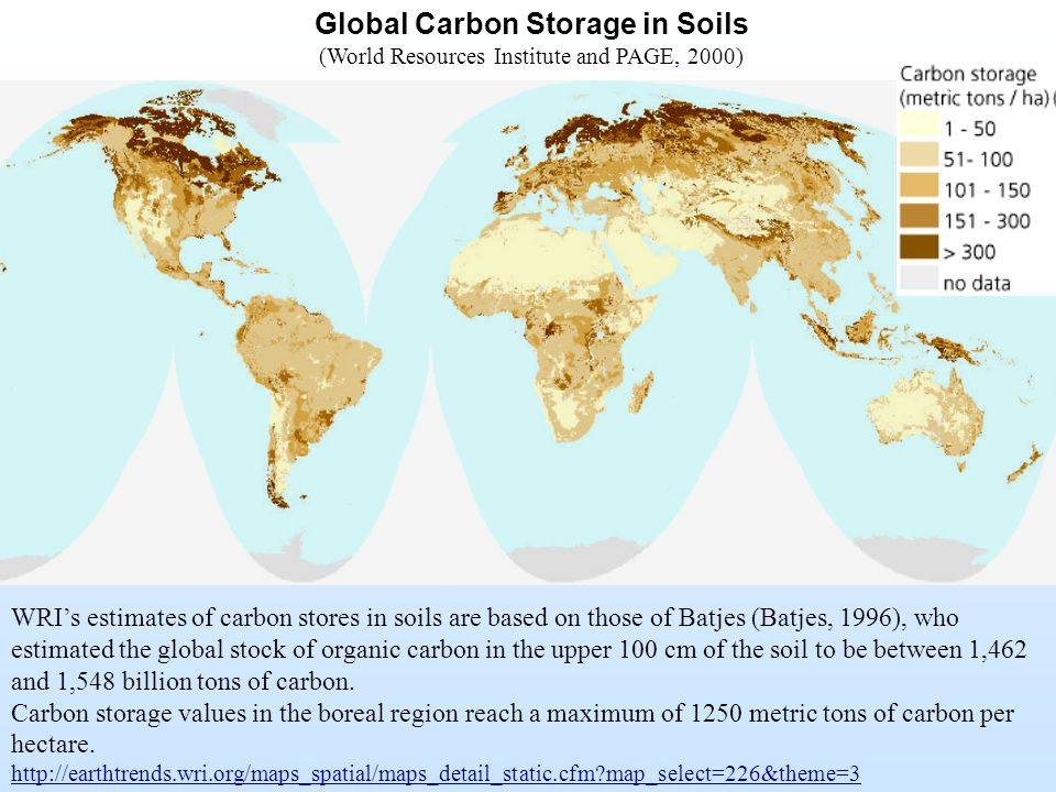 Global Carbon Storage in Soils