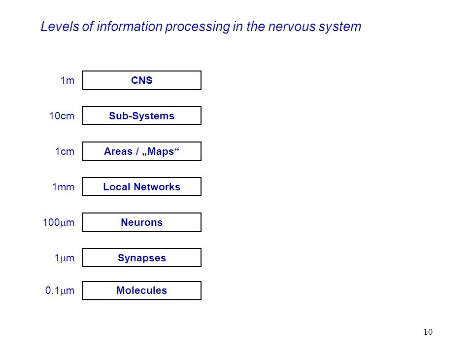 Levels of information processing in the nervous system