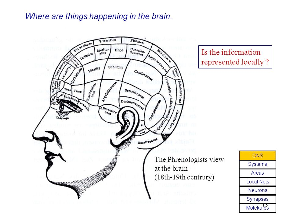 Where are things happening in the brain.